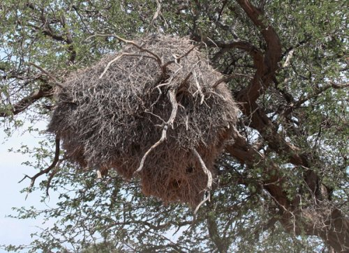 soc-weaver-nest