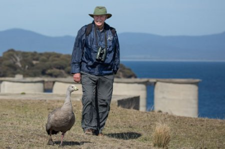 cape-barren-geese-blog