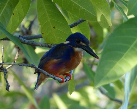 15-azure-kingfisher-blog