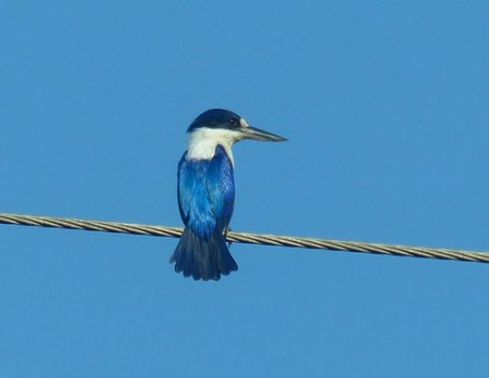 6-forest-kingfisher-blog